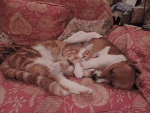 Timmy and Rosie are very much in love!